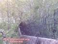 تولید كننده حفاظ شاخ گوزنی