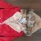 حراج پوشاک بچه گانه  از نوزادی  تا ۱۲ ساله   در گروه  لوازم پوشاک